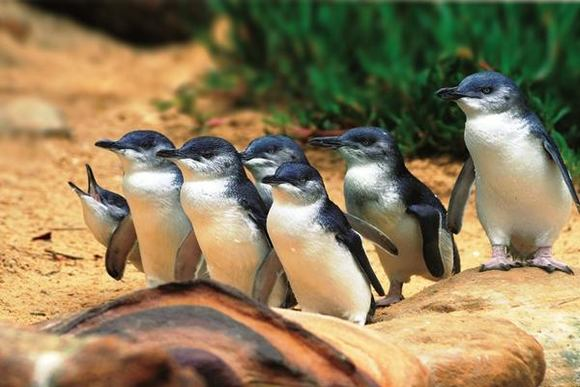 墨爾本企鵝島